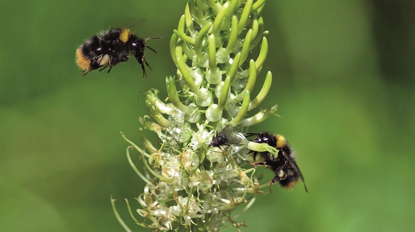warum wild bienen bayernweiter pflanzwettbewerb. Black Bedroom Furniture Sets. Home Design Ideas